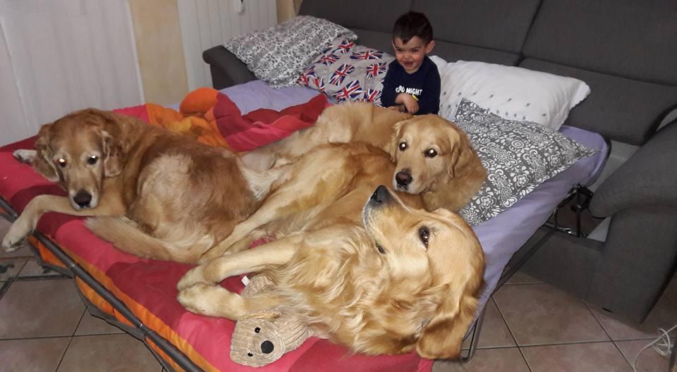 Articoli Triple Soul Golden Cuccioli Perché Un Maschio
